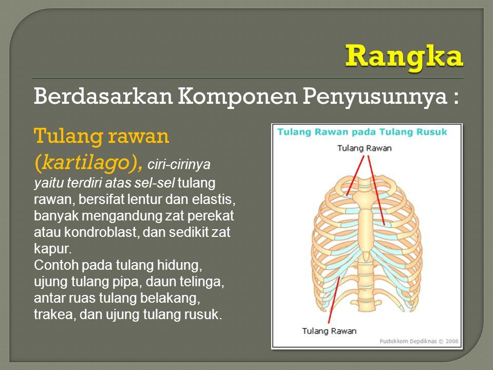 Berdasarkan Komponen Penyusunnya : Tulang rawan (kartilago), ciri-cirinya yaitu terdiri atas sel-sel tulang rawan, bersifat lentur dan elastis, banyak