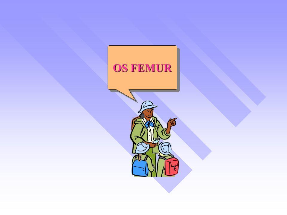 OS FEMUR