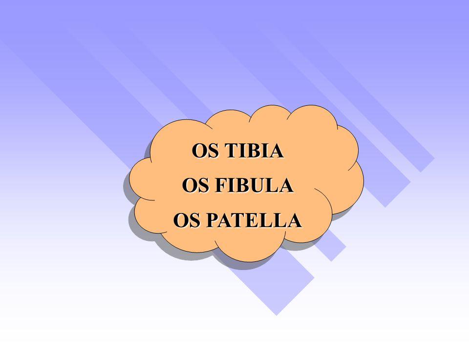 OS TIBIA OS FIBULA OS PATELLA OS TIBIA OS FIBULA OS PATELLA