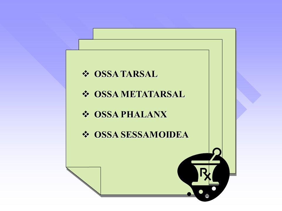 OSSA TARSAL  OSSA METATARSAL  OSSA PHALANX  OSSA SESSAMOIDEA  OSSA TARSAL  OSSA METATARSAL  OSSA PHALANX  OSSA SESSAMOIDEA