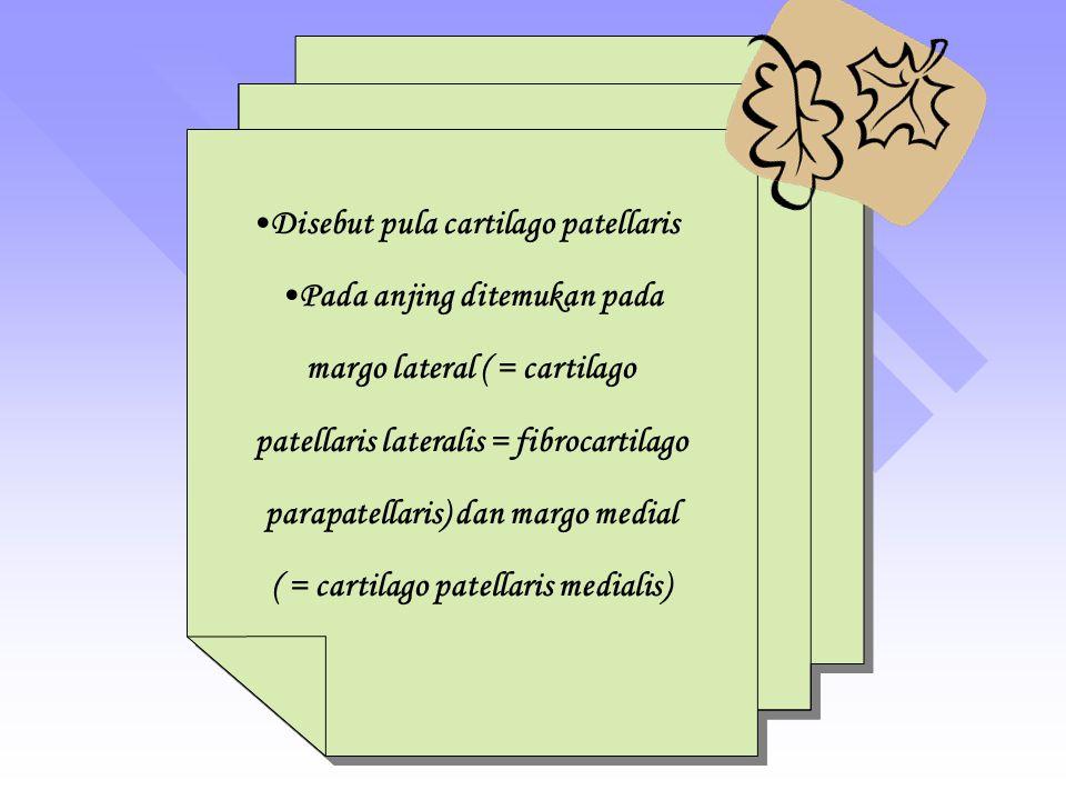 Disebut pula cartilago patellaris Pada anjing ditemukan pada margo lateral ( = cartilago patellaris lateralis = fibrocartilago parapatellaris) dan margo medial ( = cartilago patellaris medialis) Disebut pula cartilago patellaris Pada anjing ditemukan pada margo lateral ( = cartilago patellaris lateralis = fibrocartilago parapatellaris) dan margo medial ( = cartilago patellaris medialis)