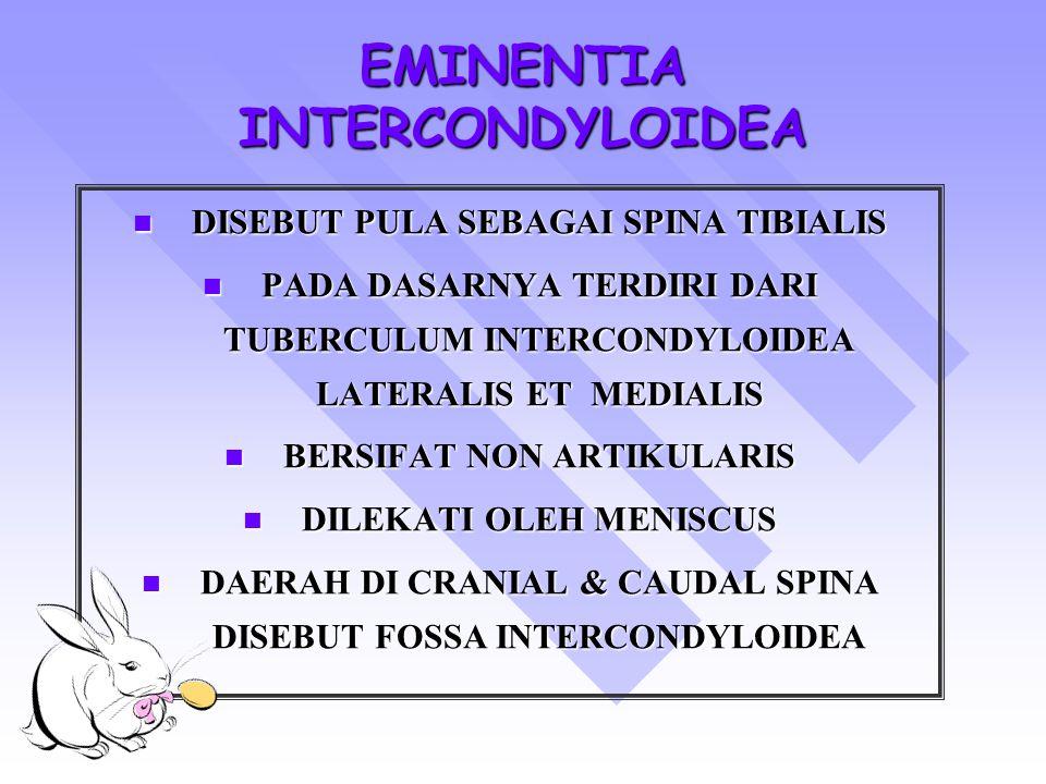 EMINENTIA INTERCONDYLOIDEA DISEBUT PULA SEBAGAI SPINA TIBIALIS DISEBUT PULA SEBAGAI SPINA TIBIALIS PADA DASARNYA TERDIRI DARI TUBERCULUM INTERCONDYLOIDEA LATERALIS ET MEDIALIS PADA DASARNYA TERDIRI DARI TUBERCULUM INTERCONDYLOIDEA LATERALIS ET MEDIALIS BERSIFAT NON ARTIKULARIS BERSIFAT NON ARTIKULARIS DILEKATI OLEH MENISCUS DILEKATI OLEH MENISCUS DAERAH DI CRANIAL & CAUDAL SPINA DISEBUT FOSSA INTERCONDYLOIDEA DAERAH DI CRANIAL & CAUDAL SPINA DISEBUT FOSSA INTERCONDYLOIDEA