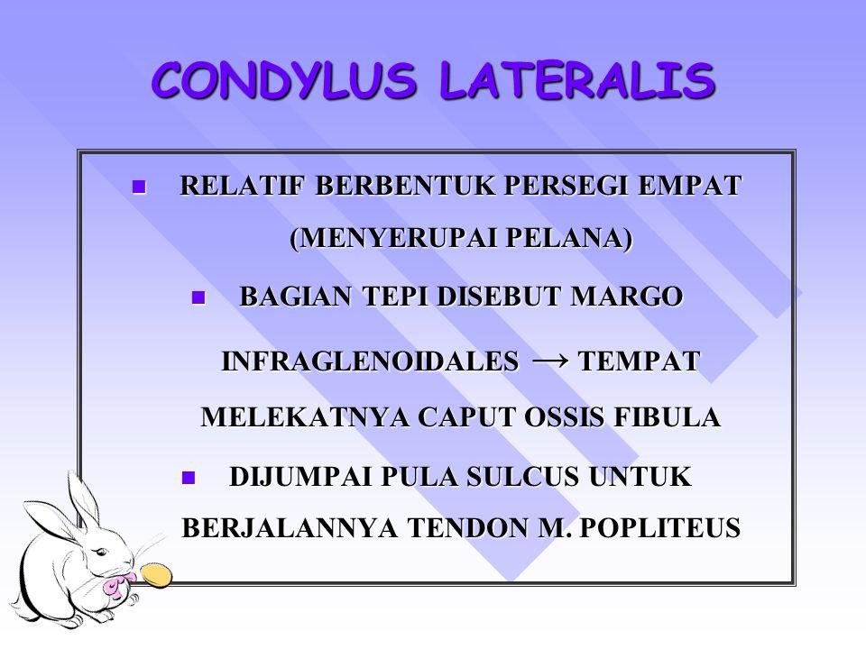 CONDYLUS LATERALIS RELATIF BERBENTUK PERSEGI EMPAT (MENYERUPAI PELANA) RELATIF BERBENTUK PERSEGI EMPAT (MENYERUPAI PELANA) BAGIAN TEPI DISEBUT MARGO I