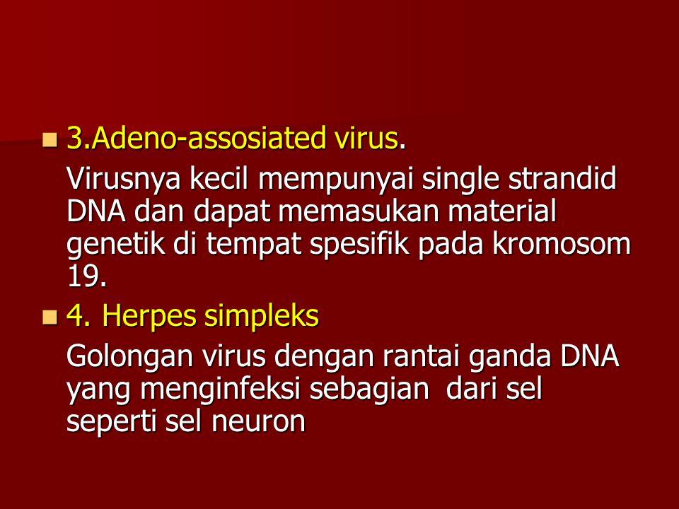 3.Adeno-assosiated virus. 3.Adeno-assosiated virus. Virusnya kecil mempunyai single strandid DNA dan dapat memasukan material genetik di tempat spesif