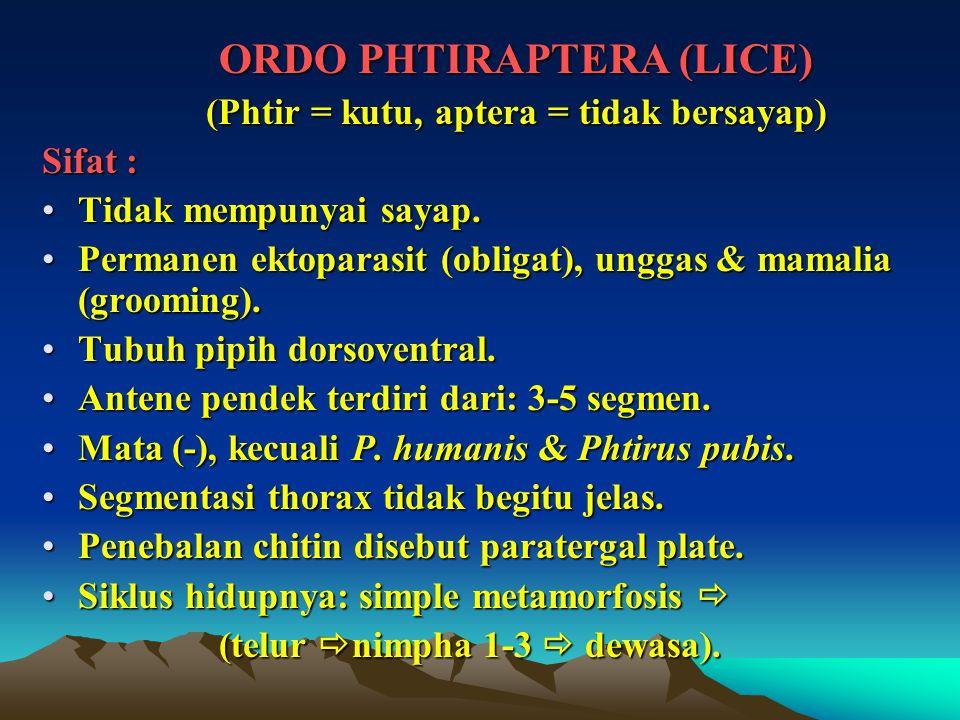 ORDO PHTIRAPTERA (LICE) (Phtir = kutu, aptera = tidak bersayap) Sifat : Tidak mempunyai sayap.Tidak mempunyai sayap. Permanen ektoparasit (obligat), u