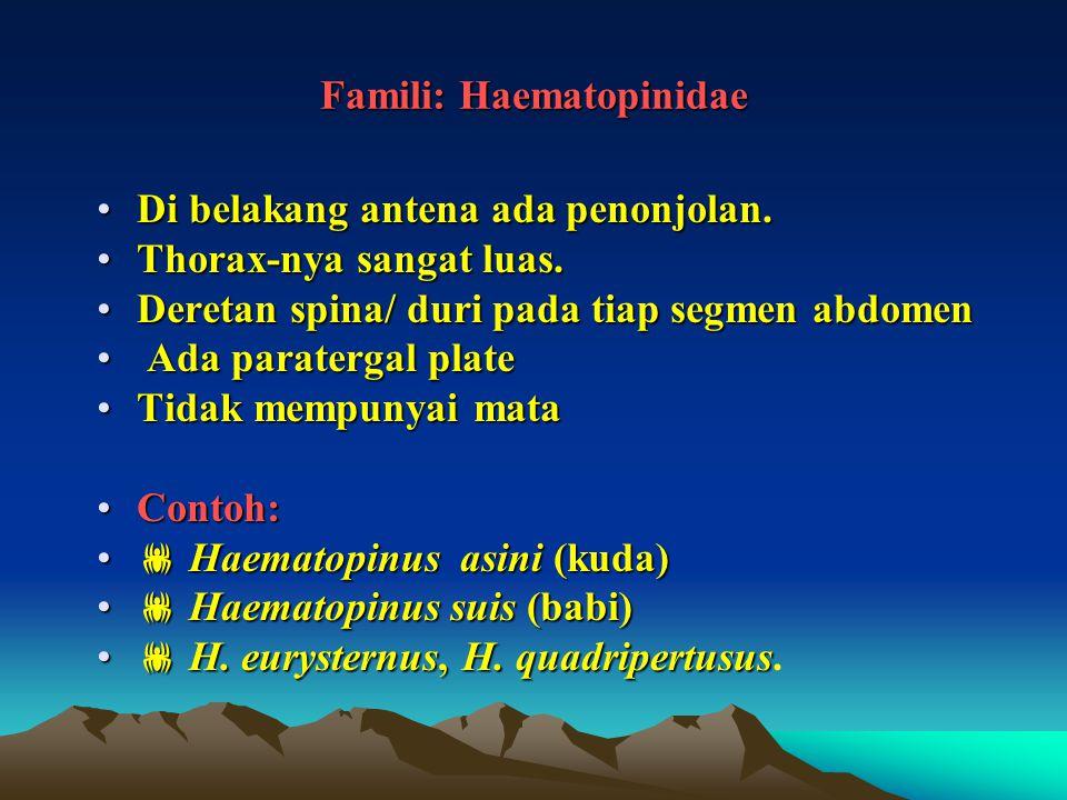 Famili: Haematopinidae Di belakang antena ada penonjolan.Di belakang antena ada penonjolan. Thorax-nya sangat luas.Thorax-nya sangat luas. Deretan spi