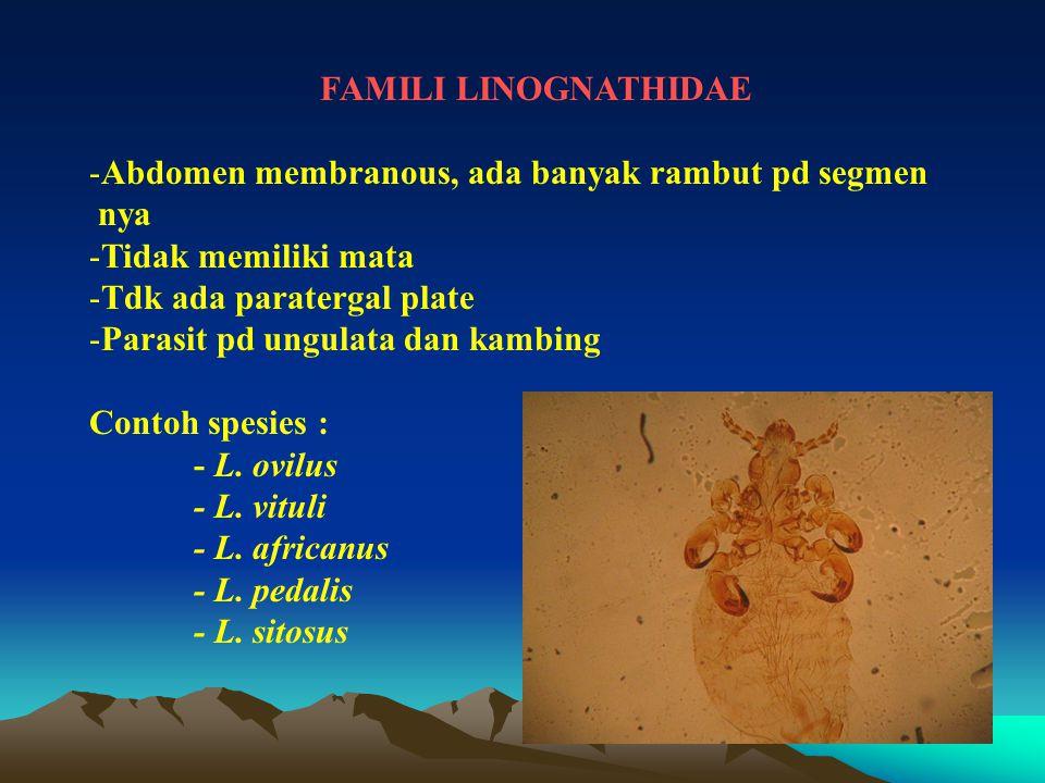 FAMILI LINOGNATHIDAE -Abdomen membranous, ada banyak rambut pd segmen nya -Tidak memiliki mata -Tdk ada paratergal plate -Parasit pd ungulata dan kamb