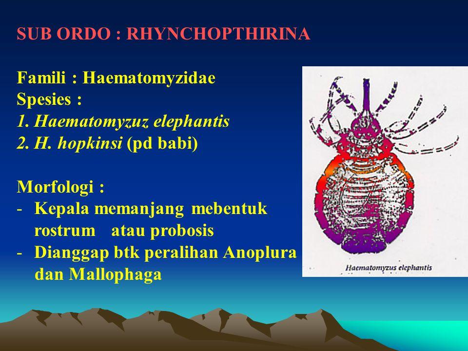 SUB ORDO : RHYNCHOPTHIRINA Famili : Haematomyzidae Spesies : 1.Haematomyzuz elephantis 2.H. hopkinsi (pd babi) Morfologi : -Kepala memanjang mebentuk
