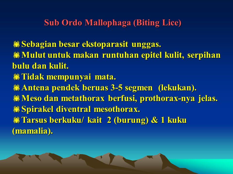 Sub Ordo Mallophaga (Biting Lice) Sub Ordo Mallophaga (Biting Lice)  Sebagian besar ekstoparasit unggas.  Mulut untuk makan runtuhan epitel kulit, s