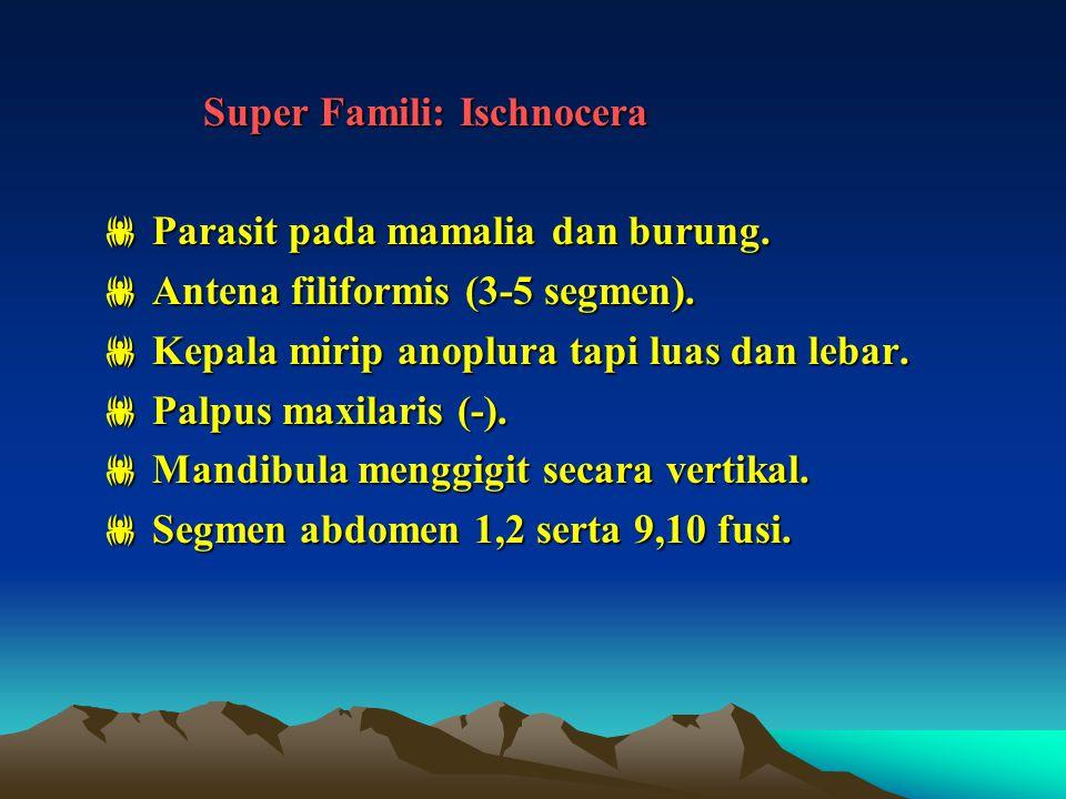 Super Famili: Ischnocera Super Famili: Ischnocera  Parasit pada mamalia dan burung.  Antena filiformis (3-5 segmen).  Kepala mirip anoplura tapi lu