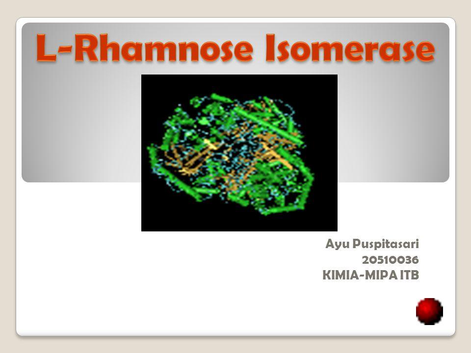 L -Rhamnose Isomerase (L-RhI) memiliki nomor Enzim 5.3.1.14 Termasuk dalam : kelas : Isomerase sub kelas : intramolecular oxidoreductase subsub kelas : aldosa-ketosa isomerisasi Nama Lain : L -rhamnose aldose-ketose-isomerase