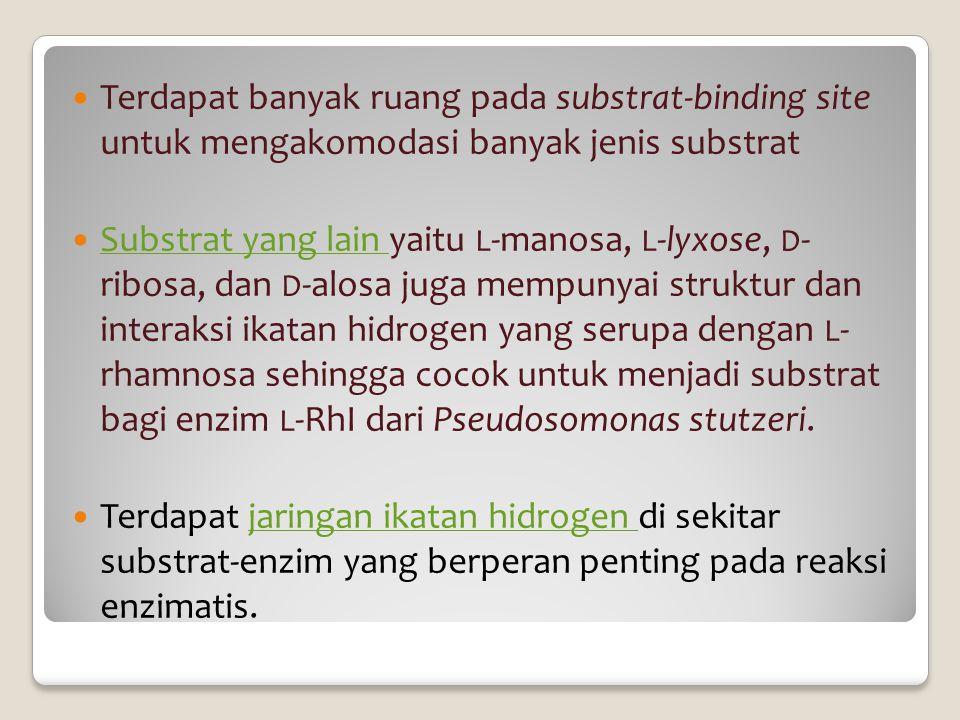Terdapat banyak ruang pada substrat-binding site untuk mengakomodasi banyak jenis substrat Substrat yang lain yaitu L -manosa, L -lyxose, D - ribosa,