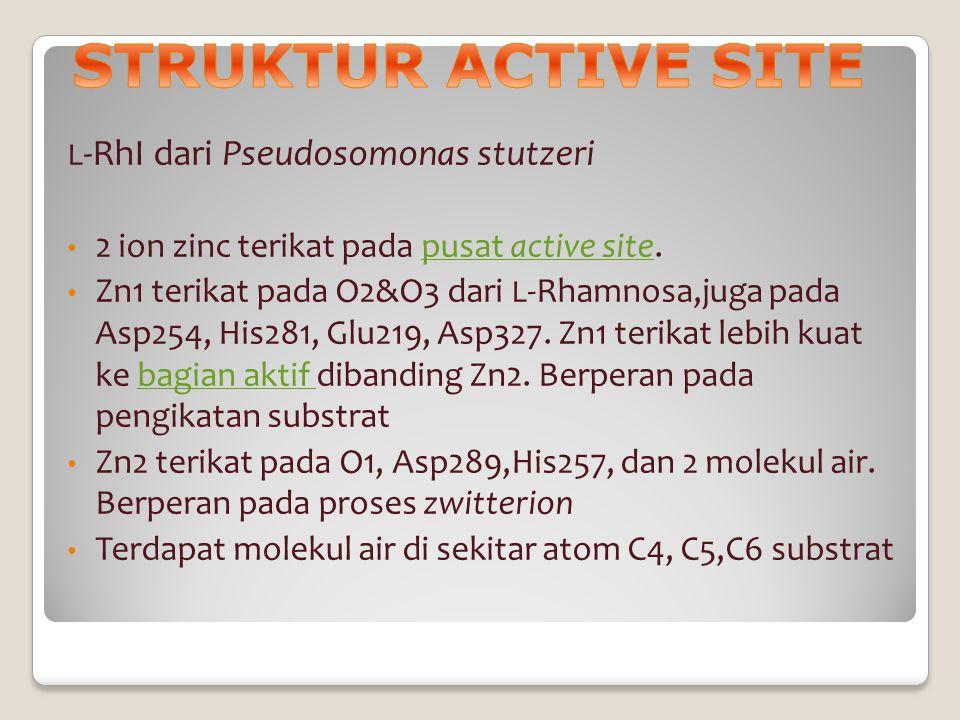 L -RhI dari Pseudosomonas stutzeri 2 ion zinc terikat pada pusat active site.pusat active site Zn1 terikat pada O2&O3 dari L -Rhamnosa,juga pada Asp25
