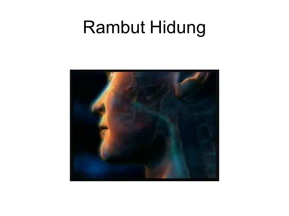 Rambut Hidung