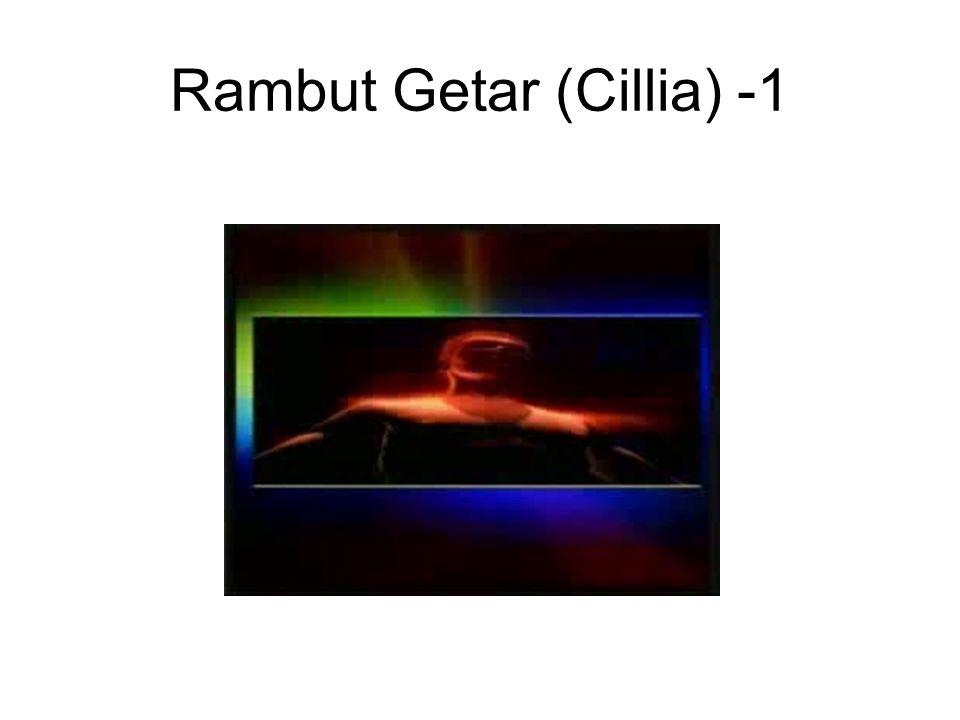 Rambut Getar (Cillia) -1
