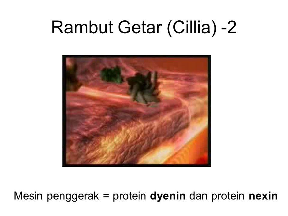 Rambut Getar (Cillia) -2 Mesin penggerak = protein dyenin dan protein nexin