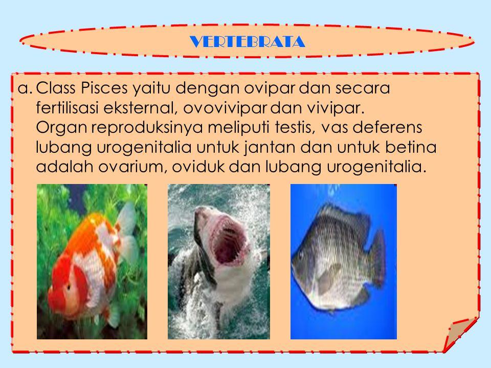 a.Class Pisces yaitu dengan ovipar dan secara fertilisasi eksternal, ovovivipar dan vivipar.