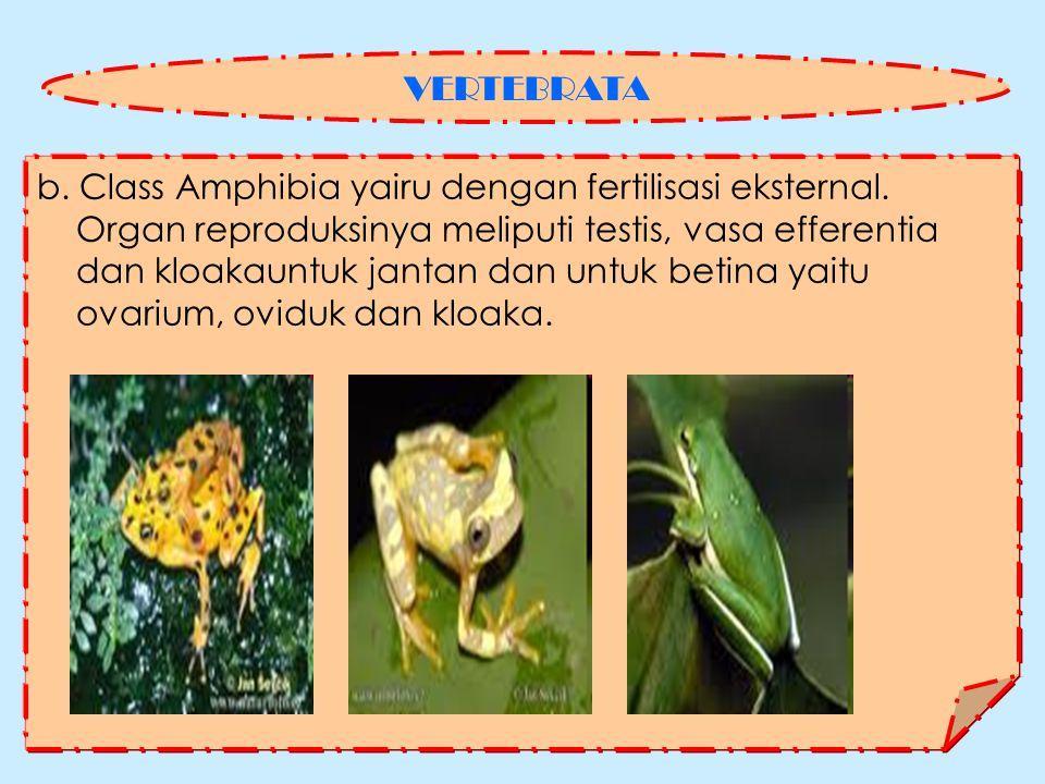 b.Class Amphibia yairu dengan fertilisasi eksternal.
