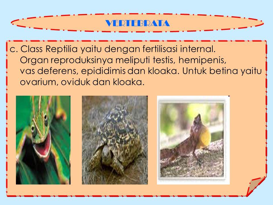 c.Class Reptilia yaitu dengan fertilisasi internal.