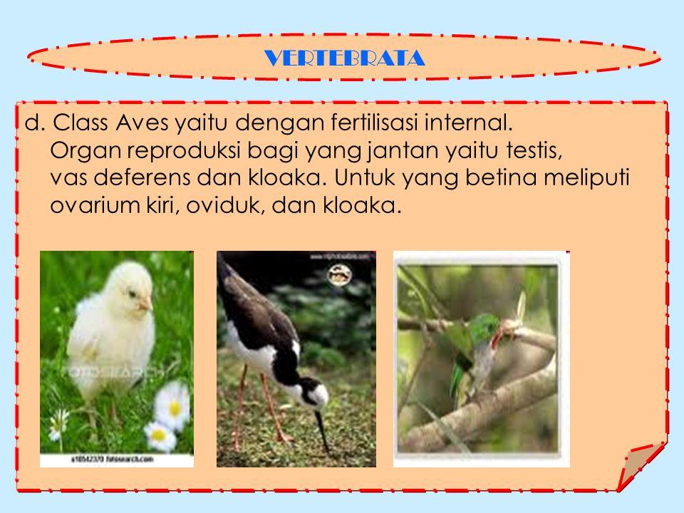 d.Class Aves yaitu dengan fertilisasi internal.