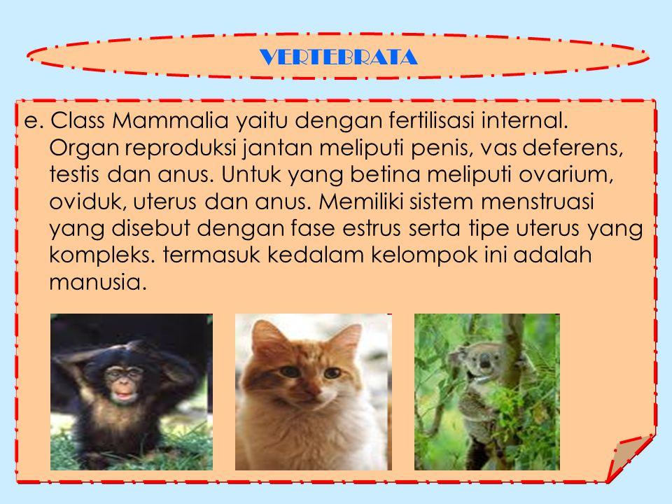 e.Class Mammalia yaitu dengan fertilisasi internal.