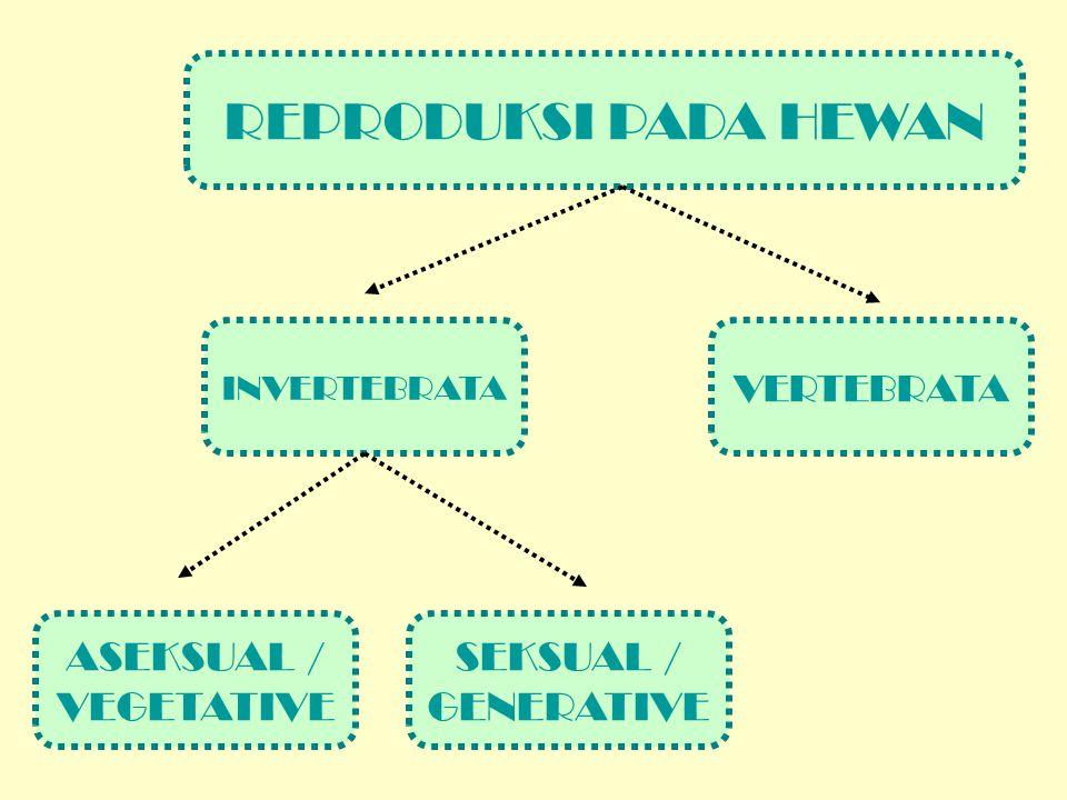 INVERTEBRATA SEKSUAL / GENERATIVE ASEKSUAL / VEGETATIVE VERTEBRATA REPRODUKSI PADA HEWAN