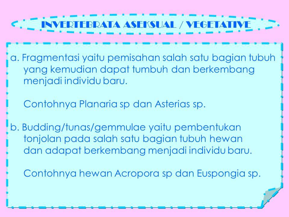KETERANGAN : Cara berkembang biak planaria sp.(cacing pipih).
