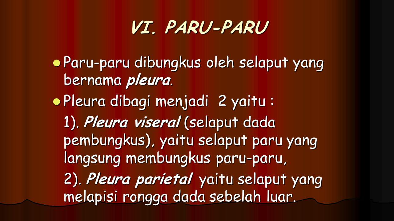VI. PARU-PARU Paru-paru dibungkus oleh selaput yang bernama pleura. Paru-paru dibungkus oleh selaput yang bernama pleura. Pleura dibagi menjadi 2 yait