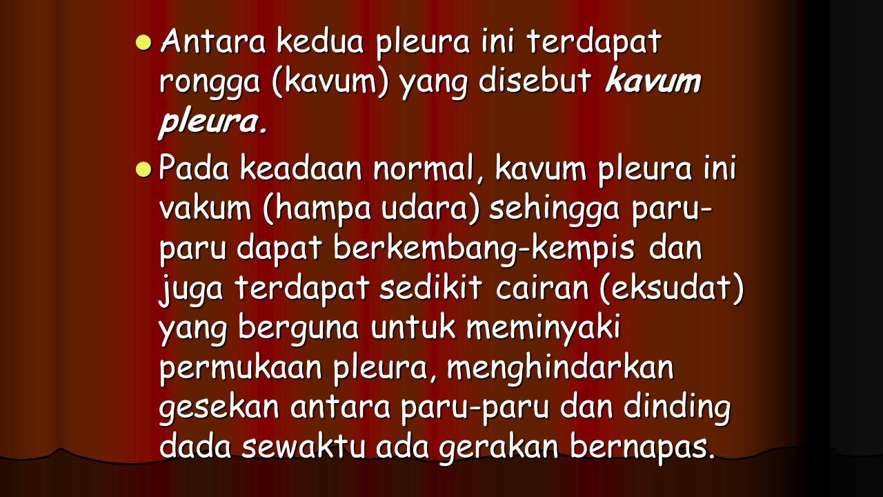 Antara kedua pleura ini terdapat rongga (kavum) yang disebut kavum pleura. Antara kedua pleura ini terdapat rongga (kavum) yang disebut kavum pleura.