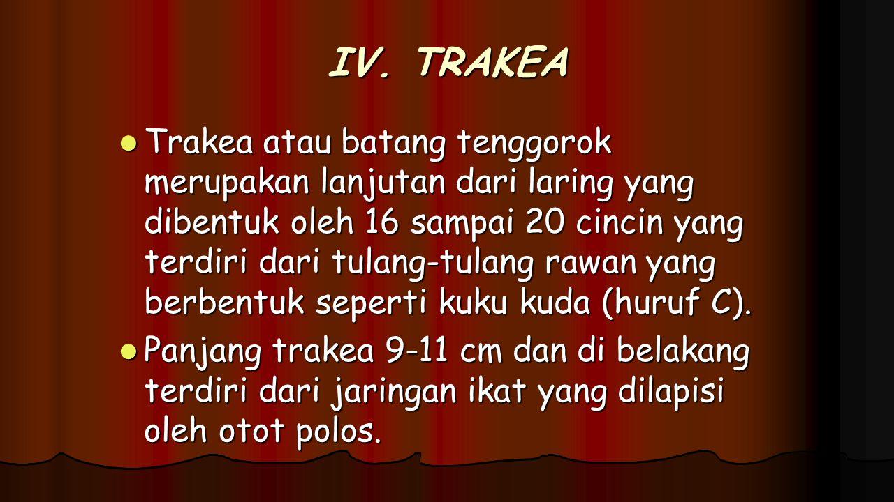 IV. TRAKEA Trakea atau batang tenggorok merupakan lanjutan dari laring yang dibentuk oleh 16 sampai 20 cincin yang terdiri dari tulang-tulang rawan ya