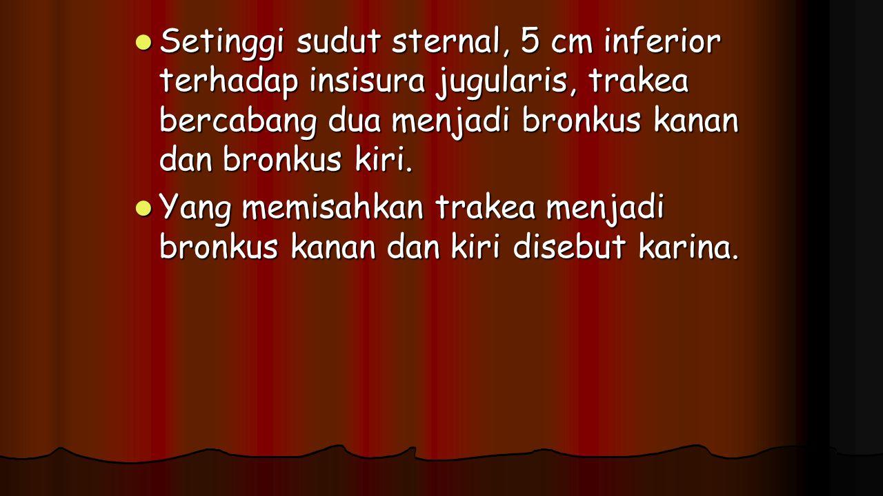 Setinggi sudut sternal, 5 cm inferior terhadap insisura jugularis, trakea bercabang dua menjadi bronkus kanan dan bronkus kiri. Setinggi sudut sternal