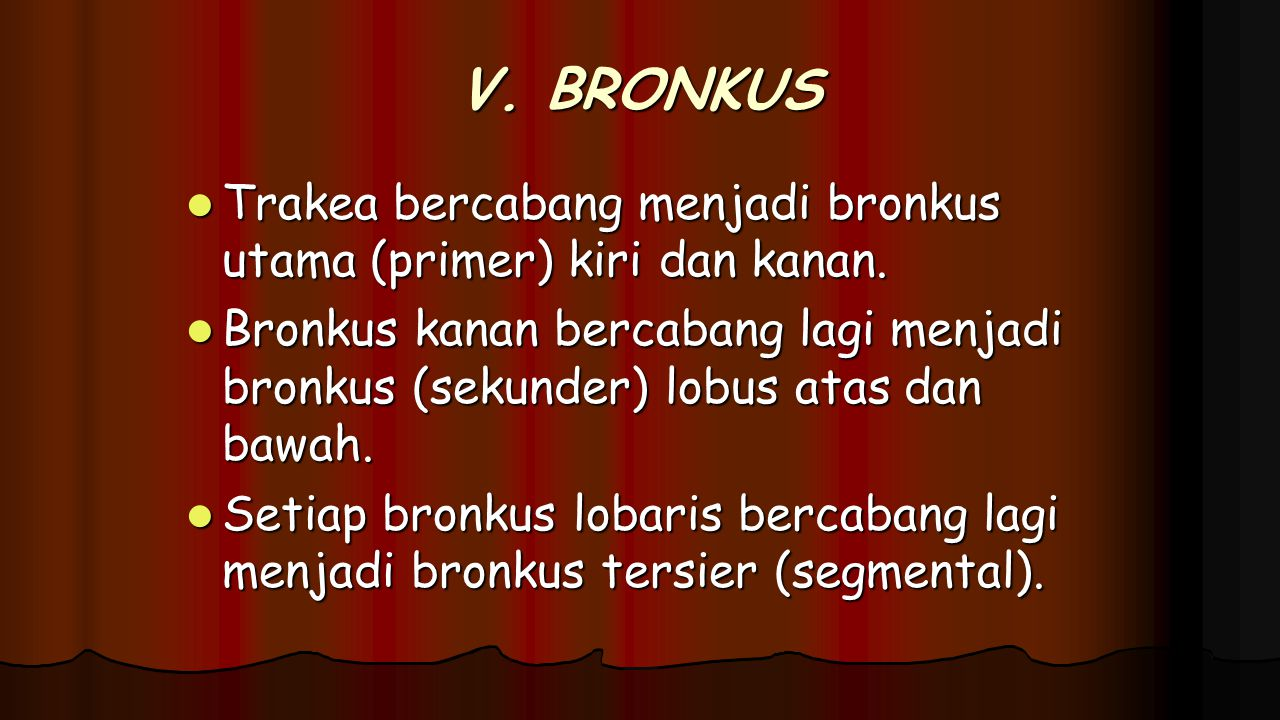 V. BRONKUS Trakea bercabang menjadi bronkus utama (primer) kiri dan kanan. Trakea bercabang menjadi bronkus utama (primer) kiri dan kanan. Bronkus kan