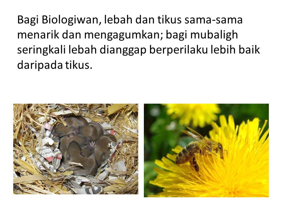 Bagi Biologiwan, lebah dan tikus sama-sama menarik dan mengagumkan; bagi mubaligh seringkali lebah dianggap berperilaku lebih baik daripada tikus.