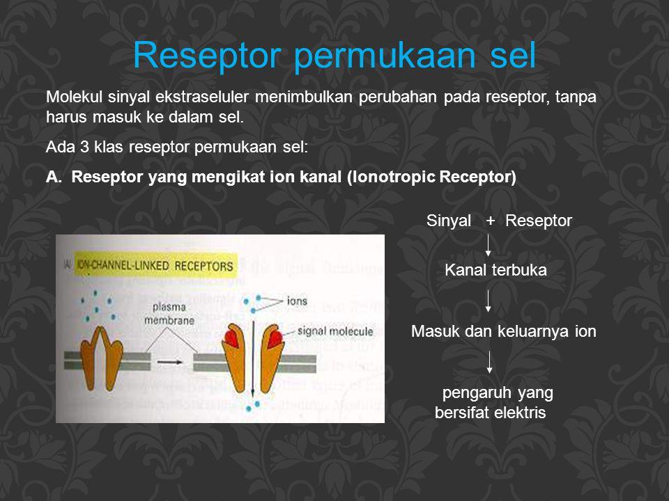 Reseptor permukaan sel Molekul sinyal ekstraseluler menimbulkan perubahan pada reseptor, tanpa harus masuk ke dalam sel. Ada 3 klas reseptor permukaan
