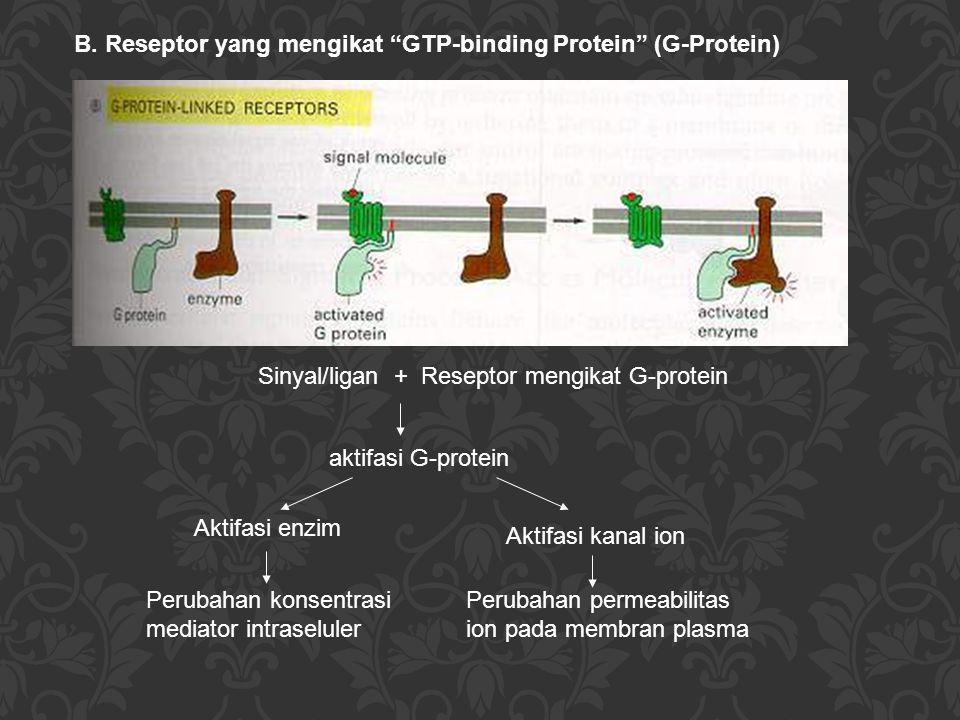 "B. Reseptor yang mengikat ""GTP-binding Protein"" (G-Protein) Sinyal/ligan + Reseptor mengikat G-protein aktifasi G-protein Aktifasi enzim Aktifasi kana"