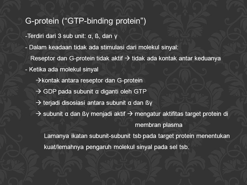 """G-protein (""""GTP-binding protein"""") -Terdiri dari 3 sub unit: α, ß, dan γ - Dalam keadaan tidak ada stimulasi dari molekul sinyal: Reseptor dan G-protei"""