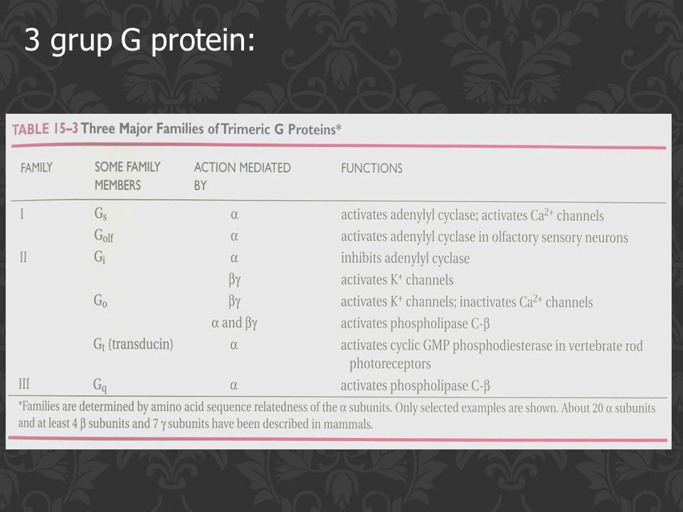 3 grup G protein:
