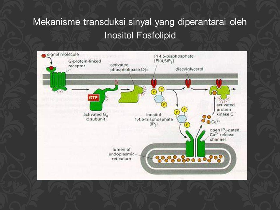 Ca 2+ -mempunyai peran yang penting dan universal di dalam sel - peningkatan konsentrasinya merupakan respon sel terhadap berbagai molekul signal, antara lain: * di sel telur: menginisiasi perkembangan embrio * di sel otot: menginduksi kontraksi otot * di sel saraf: menstimulasi sekresi neurotransmitter