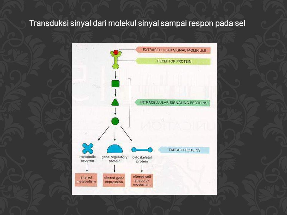 Bentuk proses pemberian sinyal antar sel 1.Endokrin Molekul sinyal : Hormon Mediator sinyal: Peredaran darah Jarak ke sel target  jauh (ke seluruh tubuh) Contoh: Adrenalin Kortisol Estradiol Glukagon Insulin Testosteron Tiroksin