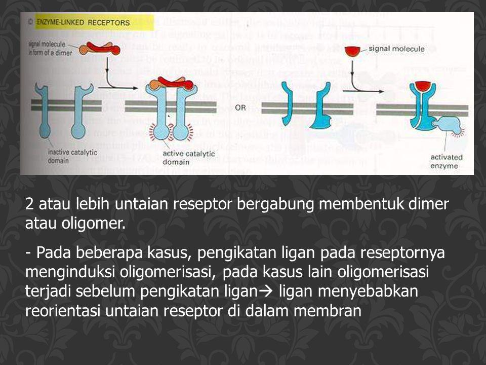 2 atau lebih untaian reseptor bergabung membentuk dimer atau oligomer. - Pada beberapa kasus, pengikatan ligan pada reseptornya menginduksi oligomeris