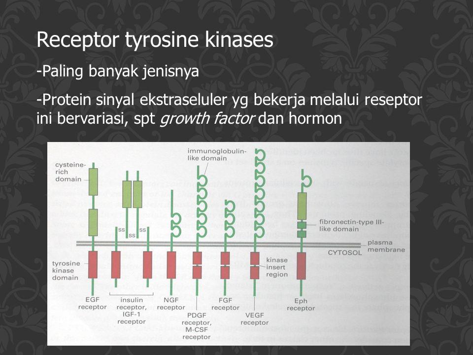 Reseptor intraseluler -merupakan protein regulator yang mengaktifkan gen - Contoh molekul sinyal: hormon steroid, hormon tiroid, retinoids, vitamin D, dll