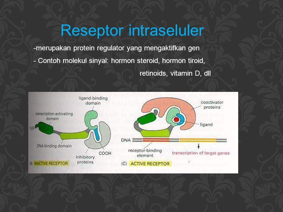 Reseptor intraseluler -merupakan protein regulator yang mengaktifkan gen - Contoh molekul sinyal: hormon steroid, hormon tiroid, retinoids, vitamin D,