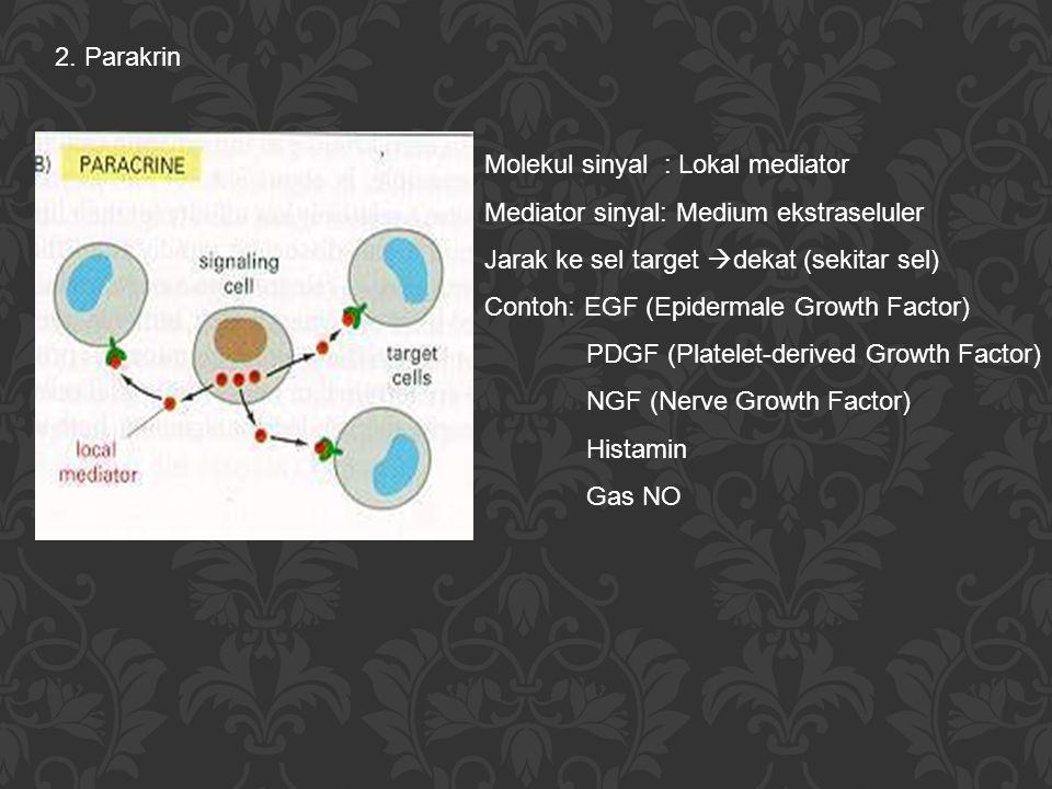 2. Parakrin Molekul sinyal : Lokal mediator Mediator sinyal: Medium ekstraseluler Jarak ke sel target  dekat (sekitar sel) Contoh: EGF (Epidermale Gr