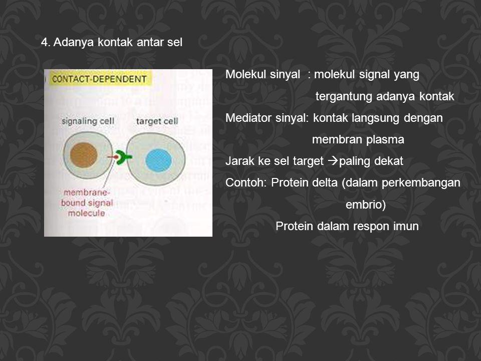4. Adanya kontak antar sel Molekul sinyal : molekul signal yang tergantung adanya kontak Mediator sinyal: kontak langsung dengan membran plasma Jarak
