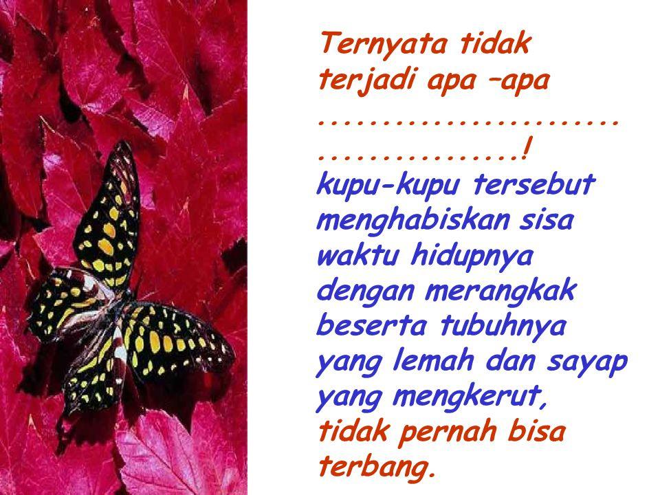Ternyata tidak terjadi apa –apa........................................! kupu-kupu tersebut menghabiskan sisa waktu hidupnya dengan merangkak beserta