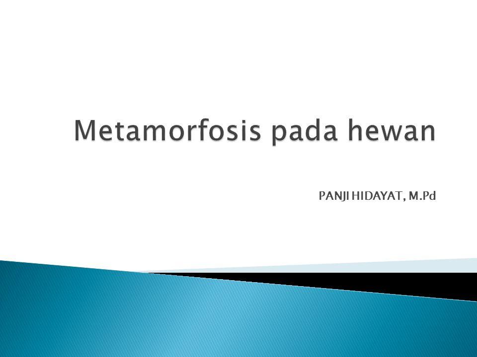  Metamorfosis adalah suatu proses perkembangan biologi pada hewan yang melibatkan perubahan penampilan fisik dan/atau struktur setelah kelahiran atau penetasan.