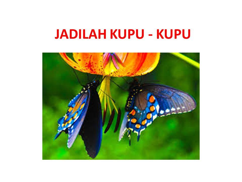 JADILAH KUPU - KUPU