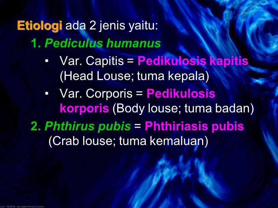 Etiologi Etiologi ada 2 jenis yaitu: 1.Pediculus humanus Var.