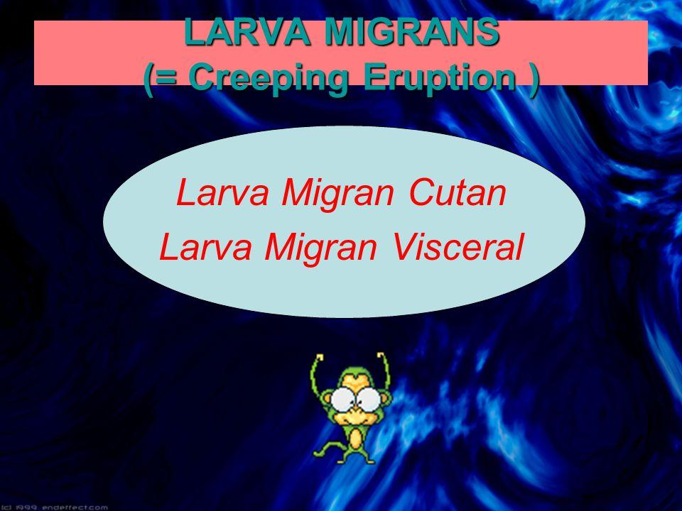 LARVA MIGRANS (= Creeping Eruption ) Larva Migran Cutan Larva Migran Visceral
