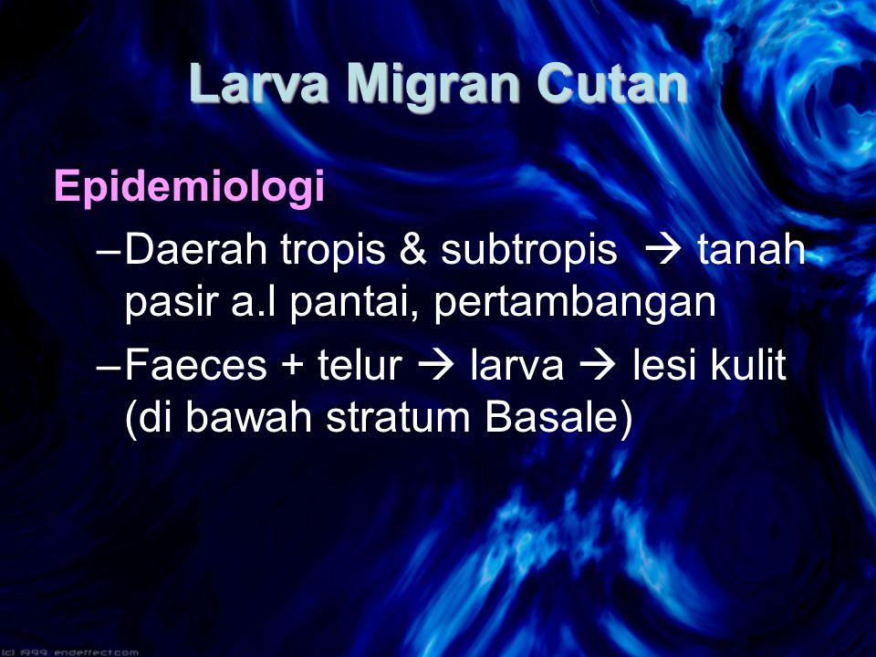 Larva Migran Cutan Epidemiologi –Daerah tropis & subtropis  tanah pasir a.l pantai, pertambangan –Faeces + telur  larva  lesi kulit (di bawah stratum Basale)